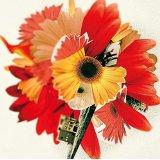 「花は咲く」-ピアノ初級編